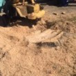 Multiple Stump Grinding