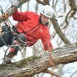 ANY TREE, ANY PLACE, We take them down SAFE. COMBS TREE SERVICE