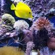 Aquarium maint. 25 years exper.