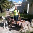 Photo #6: Dog walking. Pet Sitting. Pet Waste Removal. Grooming...