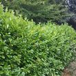 Photo #2: Trimming bushes and trees. Lowest price, quality work!