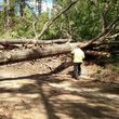 Tree Cutting Services (All Seattle Area)