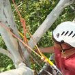 Photo #7: Md Licensed Tree Experts, Tree & Shrub Pruning, Removal, Preservation