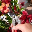 Photo #1: Md Licensed Tree Experts, Tree & Shrub Pruning, Removal, Preservation