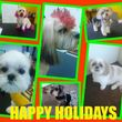 Photo #1: NEW DOG GROOMING! ONLY $27.99 FULL GROOMING