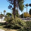 Affordable tree service and removal + irrigation system installation