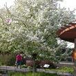 Jensen Gardens Inc. Certified Arborist
