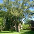 Photo #1: Waddell Tree Trimming and Removal