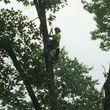 Mankus Tree Service. EXPERT TREE REMOVAL