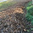 Leaf removal, landscaping service and more