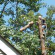CERTIFIED EXPERT TREE SERVICE, 65 FT BUCKET TRUCK & CLIMBING SERVICE