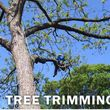 Tree Triming, Tree Removal exp.