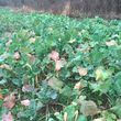Food Plots - I'm Your Huckleberry