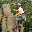 BRANCH BUSTERS. TREE REMOVAL/TREES TRIMMED. 25 YEARS EXP!