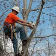 Photo #2: K WEST TREE SERVICE