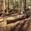 Portable sawmill and slabbing service