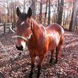 Photo #4: Paradise Found horse boarding