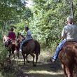 Horse Boarding, NE Oklahoma City Metro- $250. Full care!