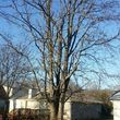 WINTER DISCOUNTS ON ALL TREE WORK! Branch Walker Tree Service