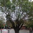 Tree specials! 25% OFF trimm removals/ stumpgrinding