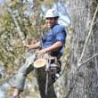 West Coast Tree Surgery | Certified Arborist | Reasonable Rates