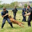 Photo #1: CANINE TRAINING SOLUTIONS