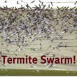 EnviroWise Pest Solutions. Termite Control