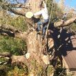 Photo #5: Experienced tree care and removal