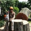 Emir's tree pruning & removal