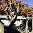 DFW Affordable Tree Service by Jackie