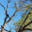Photo #2: Incorporated, insured and Bonded Crest Tree Service