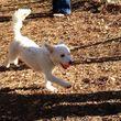 Dog/Cat nails, pet sitting, dog walking, potty visits