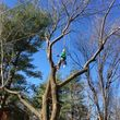 Photo #6: FULL TREE SERVICE - Dooley Bro's Lawn and Tree