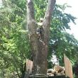 FREDY'S TREE SERVICES. FULLY INSURED! TREE TRIMMING AND REMOVAL