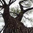 TREE SERVICE - CREED'S TREE CARE