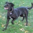 Kim's Critter Care! Professional Pet Sitting & Dog Walking. Bonded & Insured