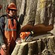 CASE TREE SERVICES - REMOVAL, TRIMMING, STUMP REMOVAL