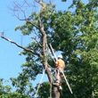 Ron's Professional tree care (safe trees have been injure)