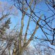 NASHLA TREE SERVICE + Snow removal