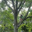 Photo #6: TREE SERVICE - drone rescue 24/7 at an affordable price!