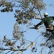 Photo #2: Bruce's Tree Service