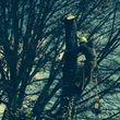 ARBORIST/CLIMBER from Arbor Sense Tree Care and Trimming