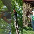 Insured Arborists. Affordable Tree Care