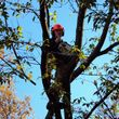 Photo #2: STUMP GRINDING, LOT CLEARING, STUMP REMOVAL. ACCURATE TREE SERVICE
