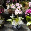 Added Decor for Party's- centerpeices! Kawamoto Orchid Nursery