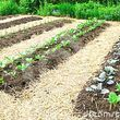 Veggie Gardens The Easy Way