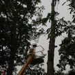 POTTER TREE SERVICE. Tree Removal N Trimming