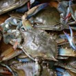 CRABMAN Blue Crabs and Shrimp