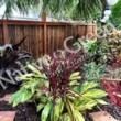 Photo #11: Native Green Fence & Landscape, LLC. - VINYL - BAMBOO - WOOD