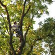 TEZNA LANDSCAPING & TREE TRIMMING SERVICES